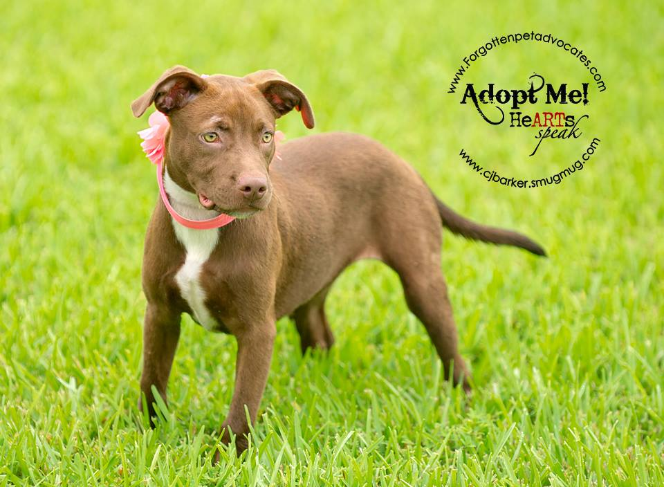 """""""Sienna"""" ADOPTED 10-18-2016"""