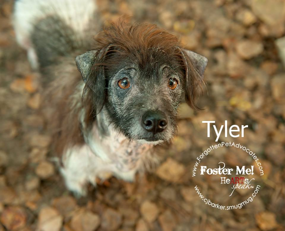 """""""Tyler"""" ADOPTED 11-29-2016"""