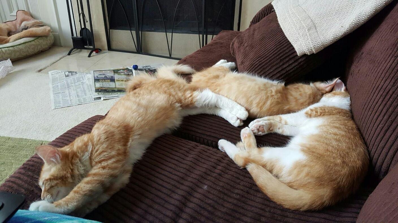 """""""Finn, Kip and Ollie"""" in their home !"""