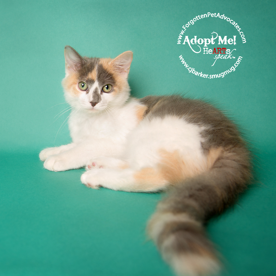 """""""Astra"""" ADOPTED 12-18-2016"""