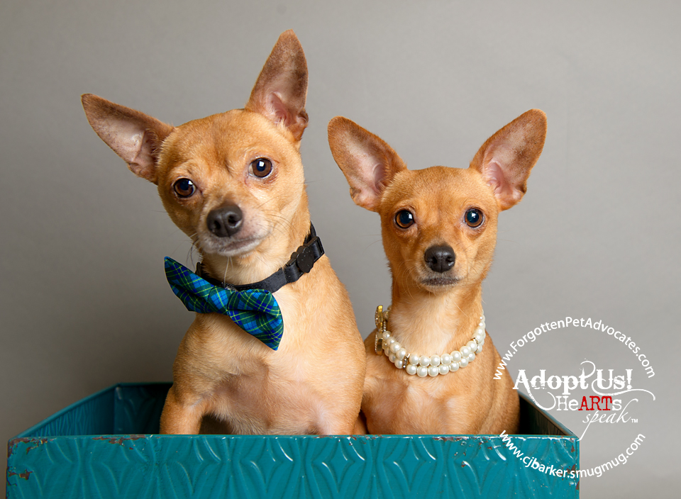 """Ben and Geri"" ADOPTED TOGETHER 12-11-2016"