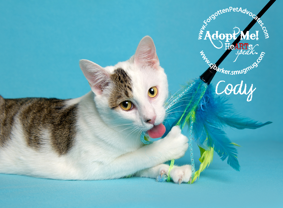 """""""Cody"""" ADOPTED 9-14-2016"""