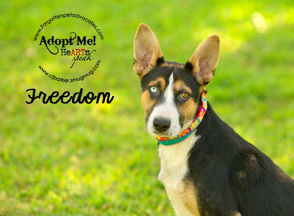 """Freedom"" ADOPTED TOGETHER with ""Fiona"" 9-23-2016"