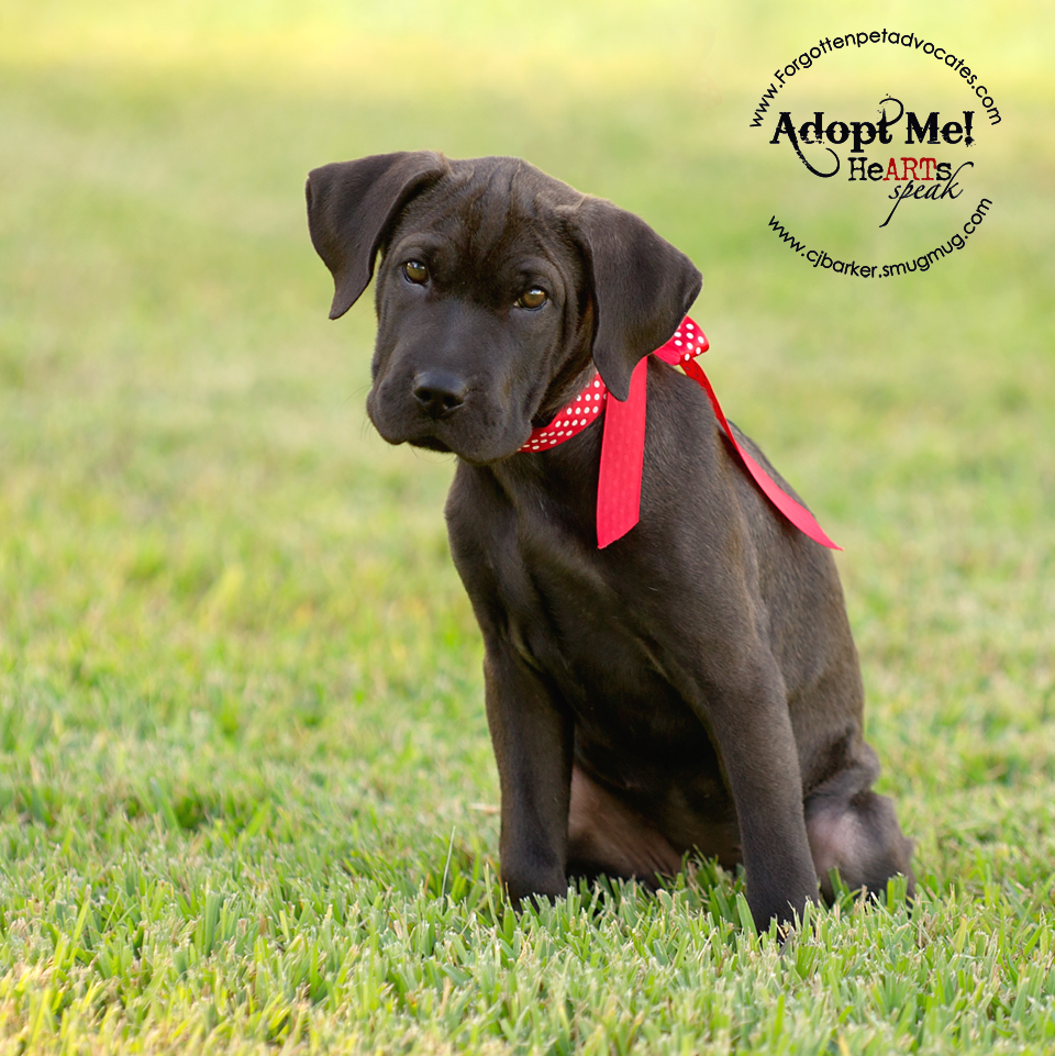 """""""Mallory"""" ADOPTED 11-26-2016"""