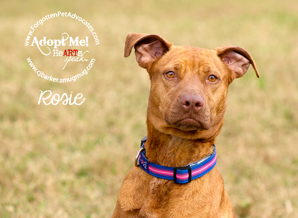 """""""Rosie"""" ADOPTED 12-7-2016"""