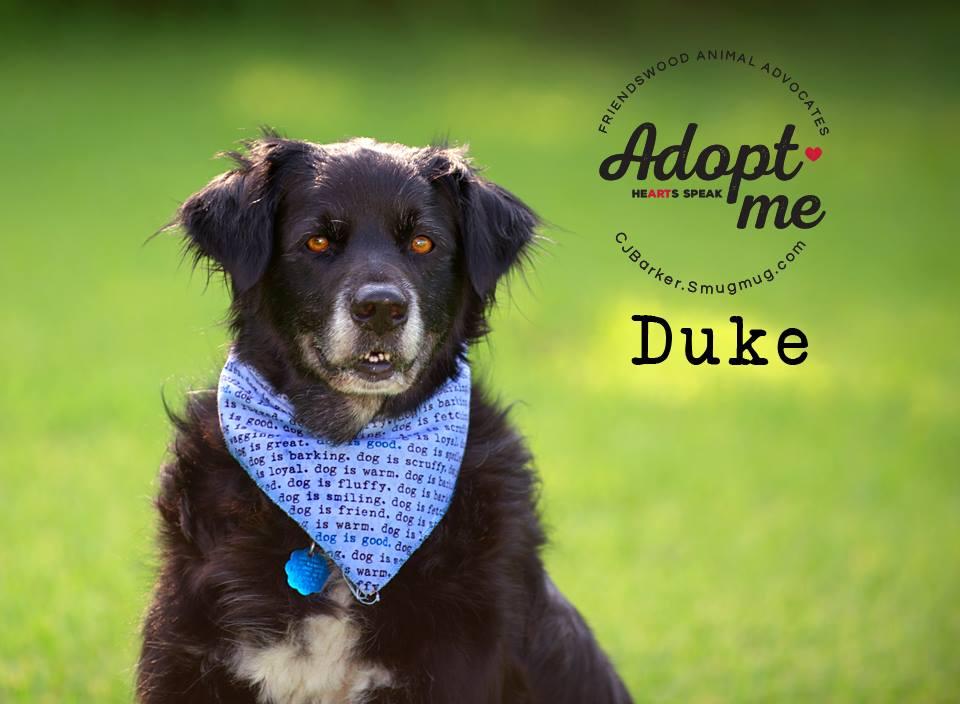 """""""Duke"""" ADOPTED 8-2017"""
