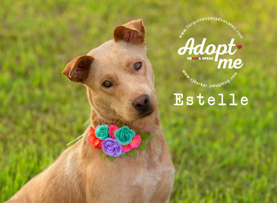 """""""Estelle"""" ADOPTED 9-30-2017"""