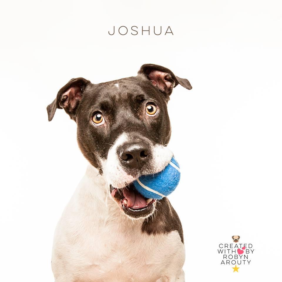 """""""Joshua"""" ADOPTED 12-20-2017"""