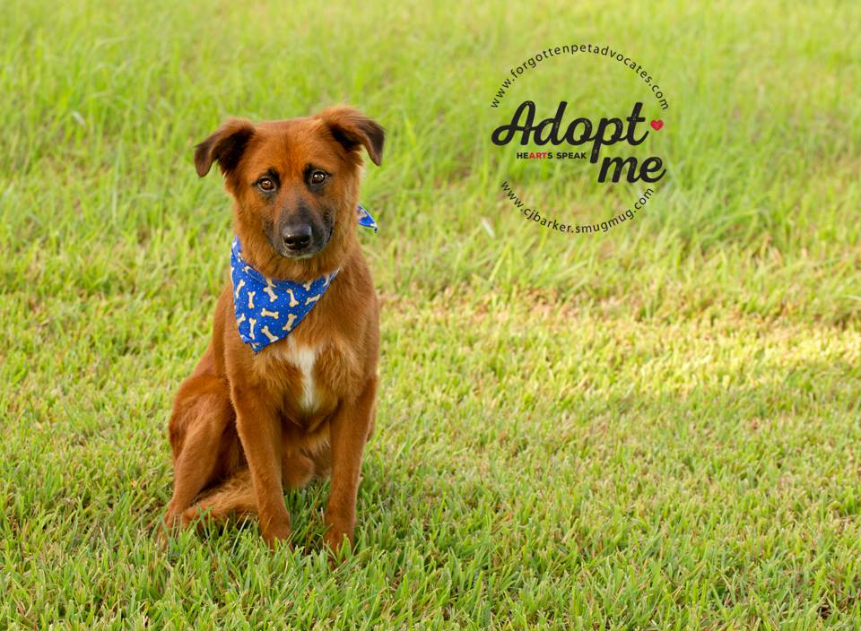 """""""Rusty"""" ADOPTED 9-10-2017"""