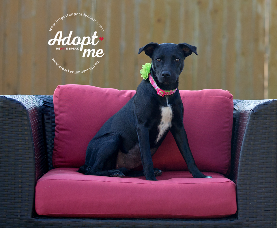 """""""Anna Belle"""" ADOPTED 12-25-2017"""