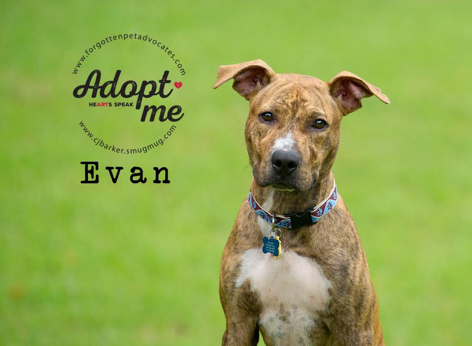 """""""Evan"""" ADOPTED 10-18-2017"""