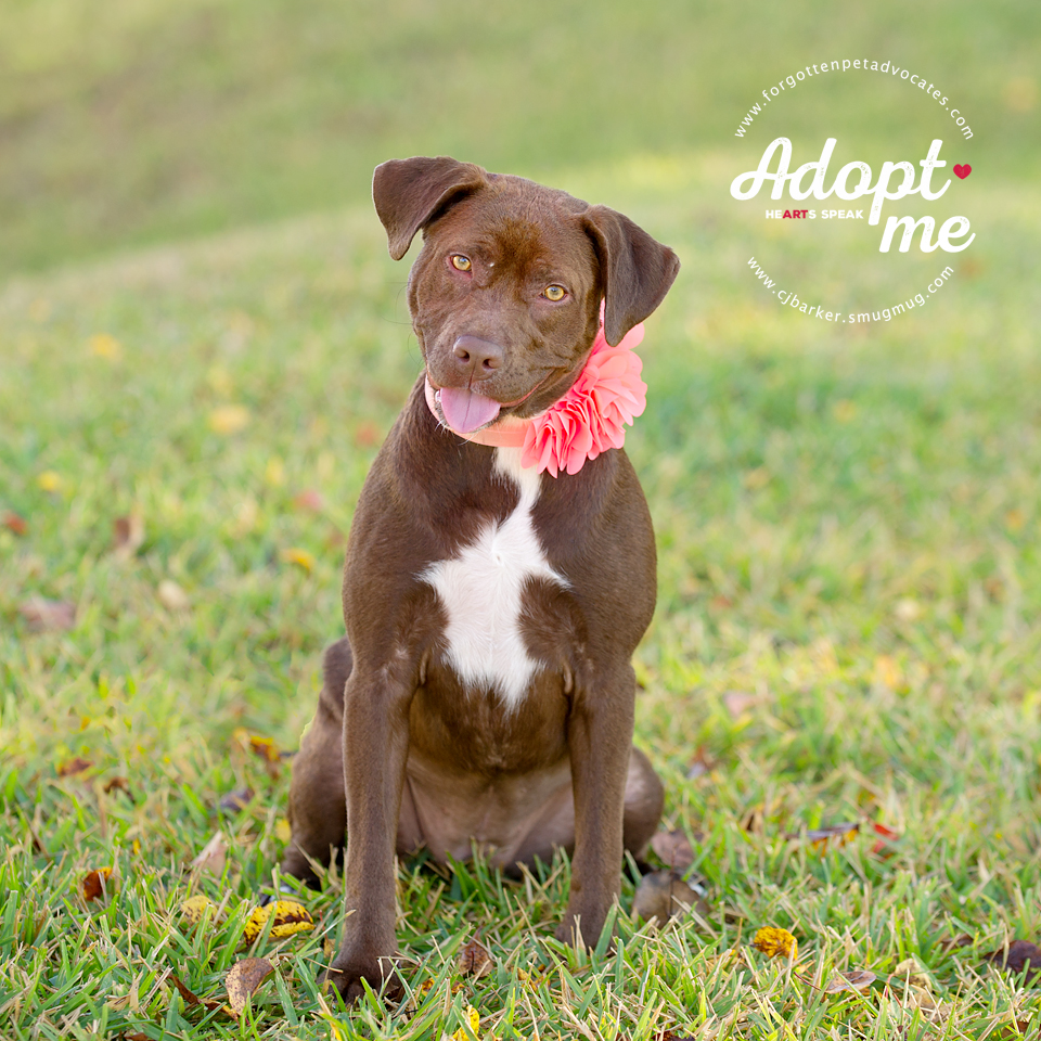 """""""Josie"""" ADOPTED 12-23-2017"""