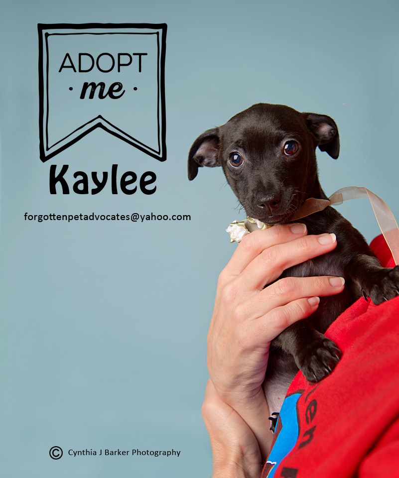 """""""Kaylee"""" ADOPTED 4-1-2017"""