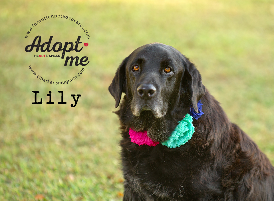 """""""Lily"""" ADOPTED 10-28-2017"""