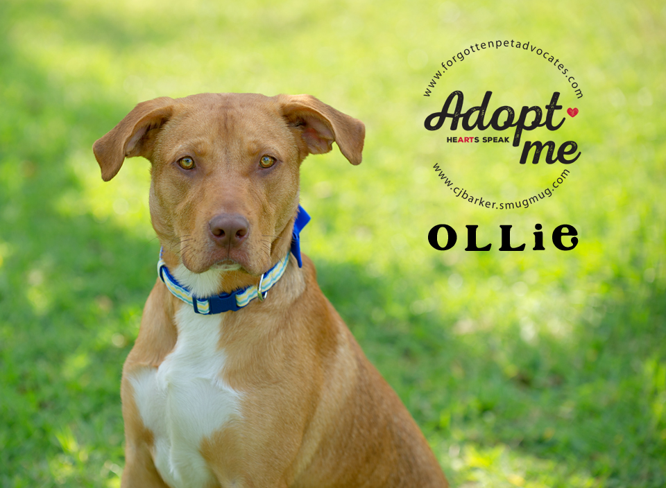 """""""Ollie"""" ADOPTED 7-29-2017"""