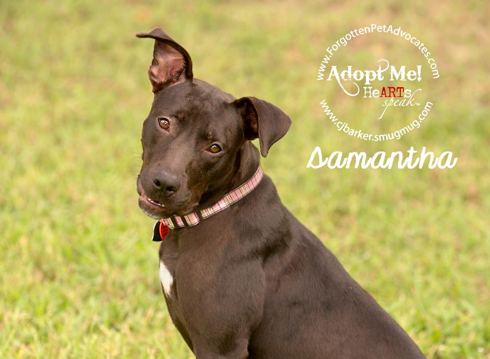 """""""Samantha"""" ADOPTED 10-1-2017"""