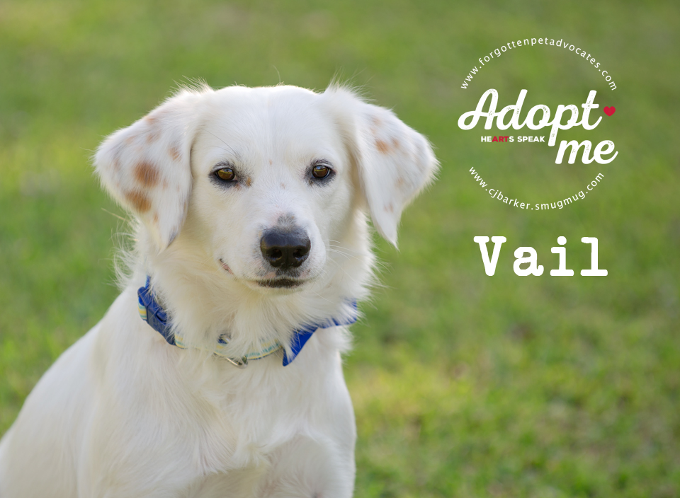 """""""Vail"""" (now """"Chance"""") ADOPTED 11-26-2017"""