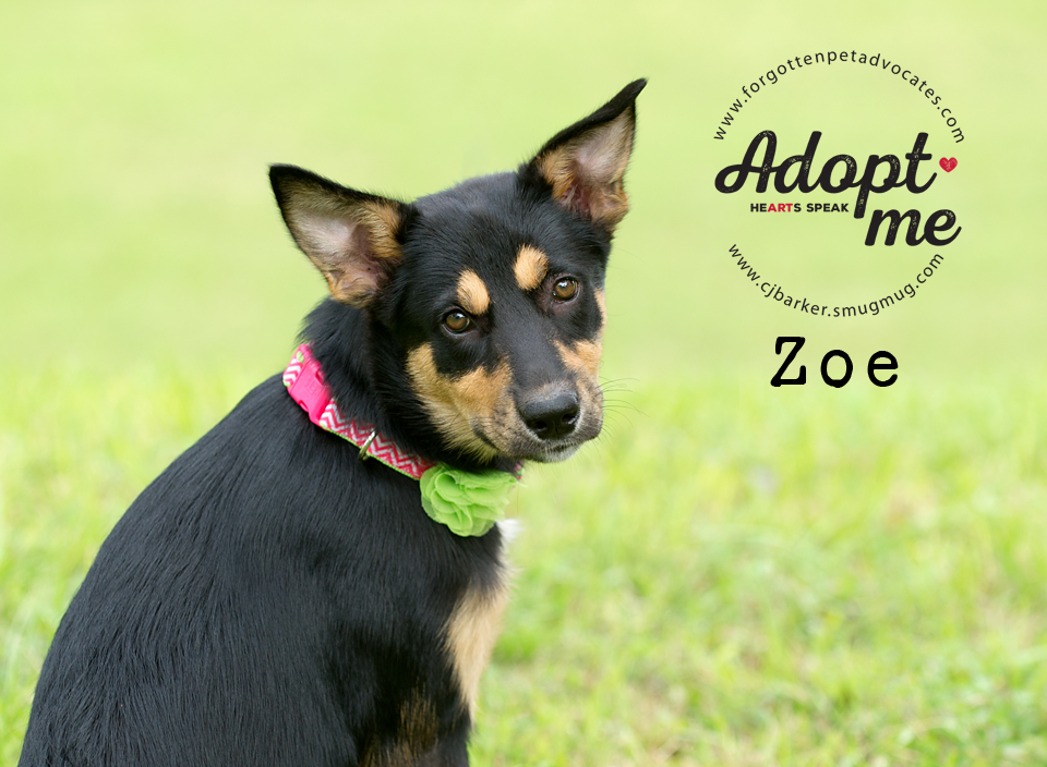 """""""Zoe"""" ADOPTED 10-11-2017"""