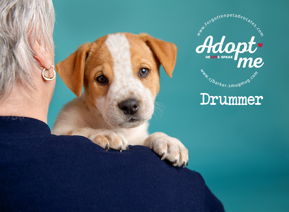 """Drummer"" ADOPTED 2-3-2018"